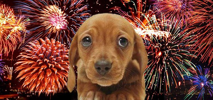 Photo of Pet safety tips for fireworks season