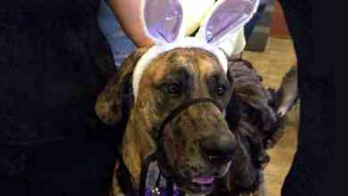 Photo of Drag Bingo supports Great Dane rescue Friday night